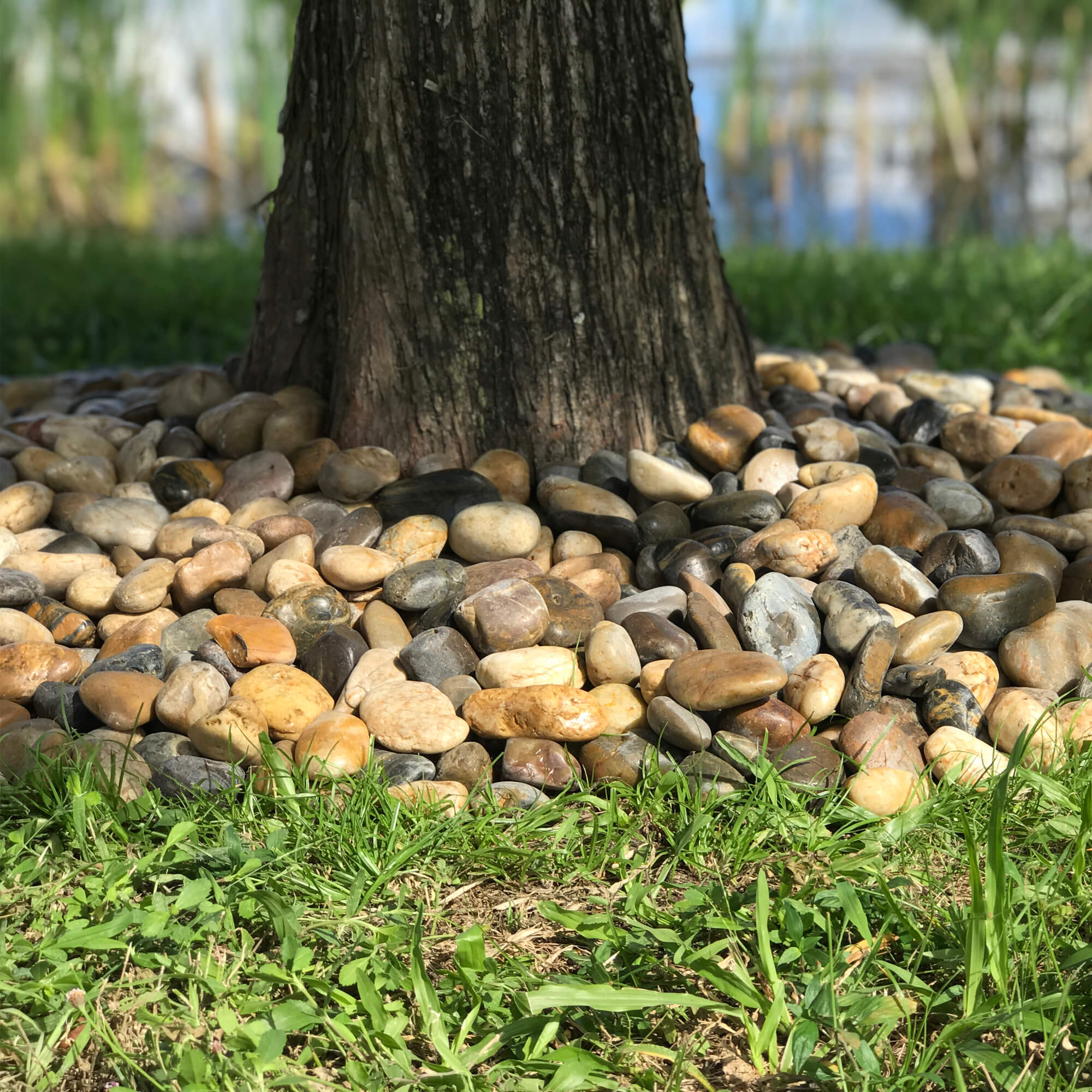 Pebbles layered around a tree trunk