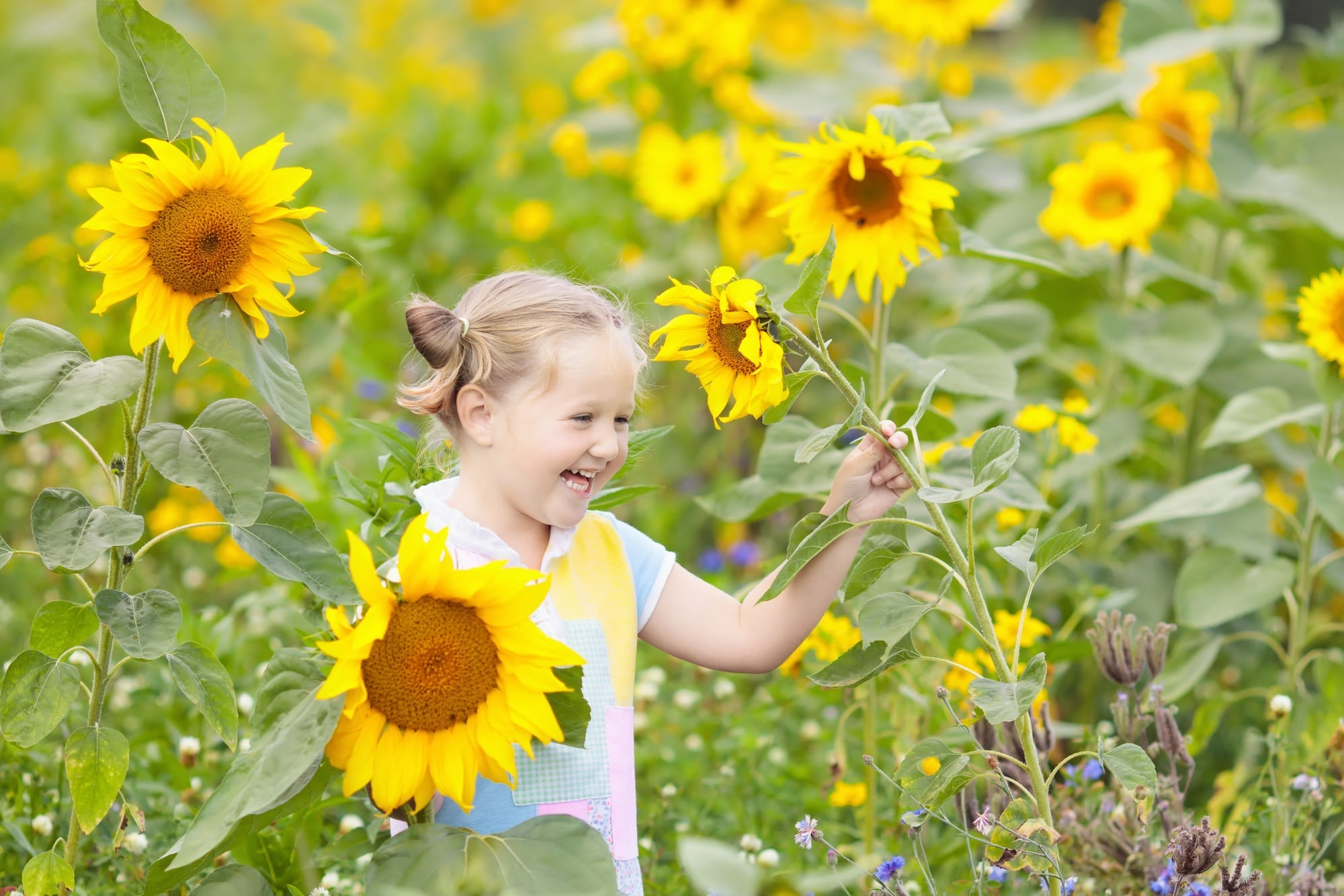 Little girl playing in the sunflowers