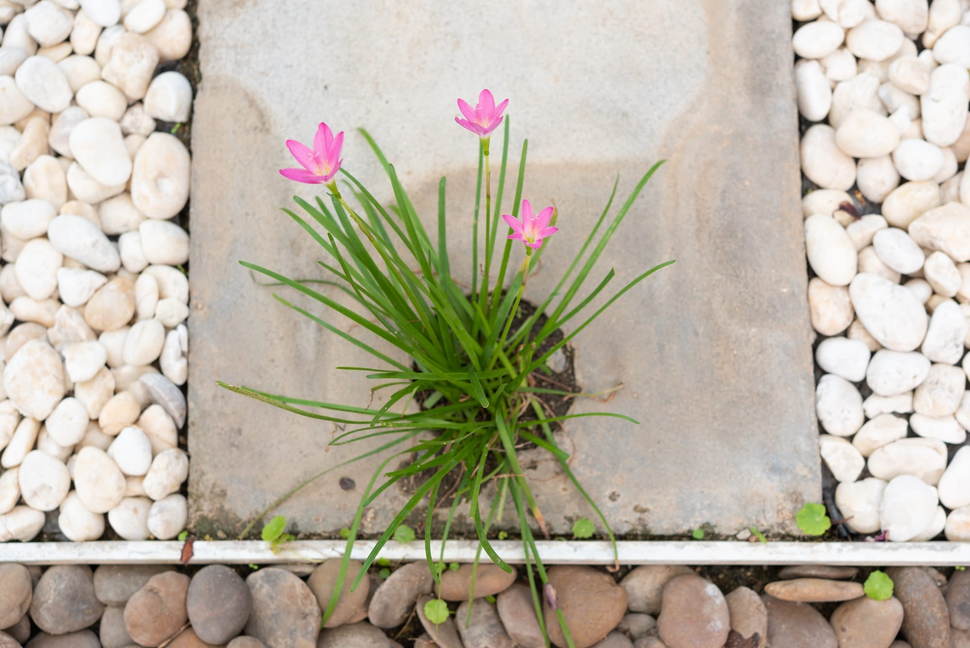 Using landscape pebbles to decorate flowers