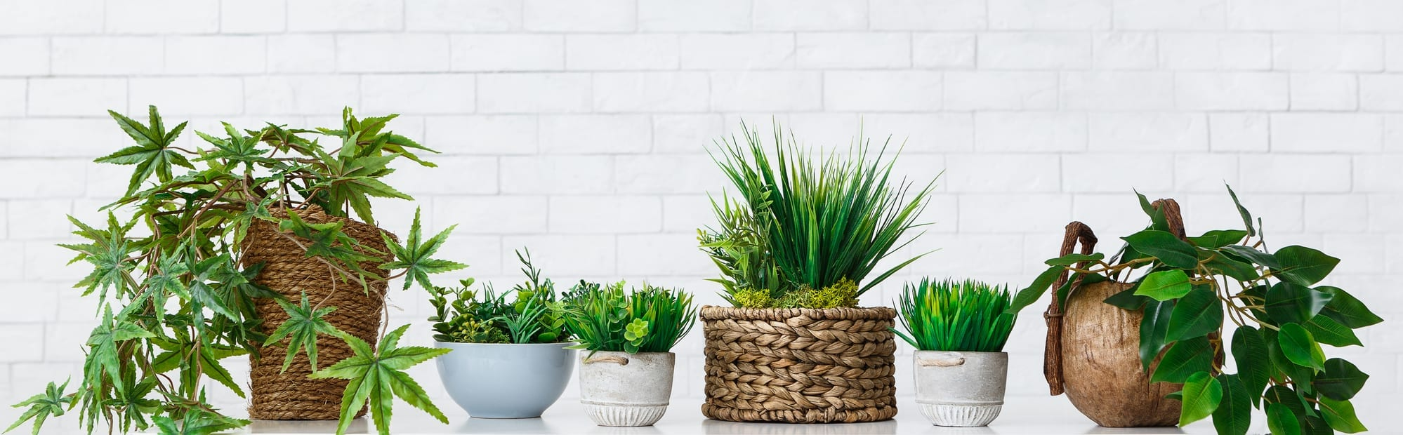 Potted plants against a white background