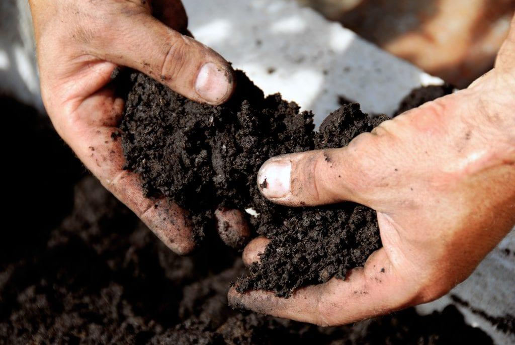 Black fertile soil