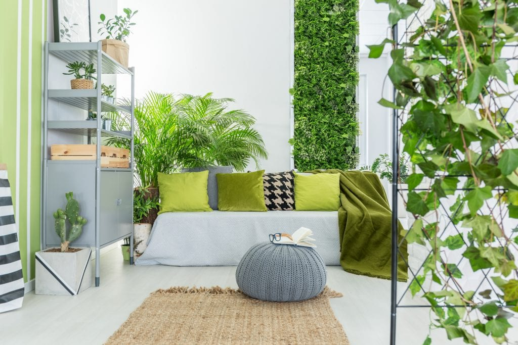 A home with many indoor plants
