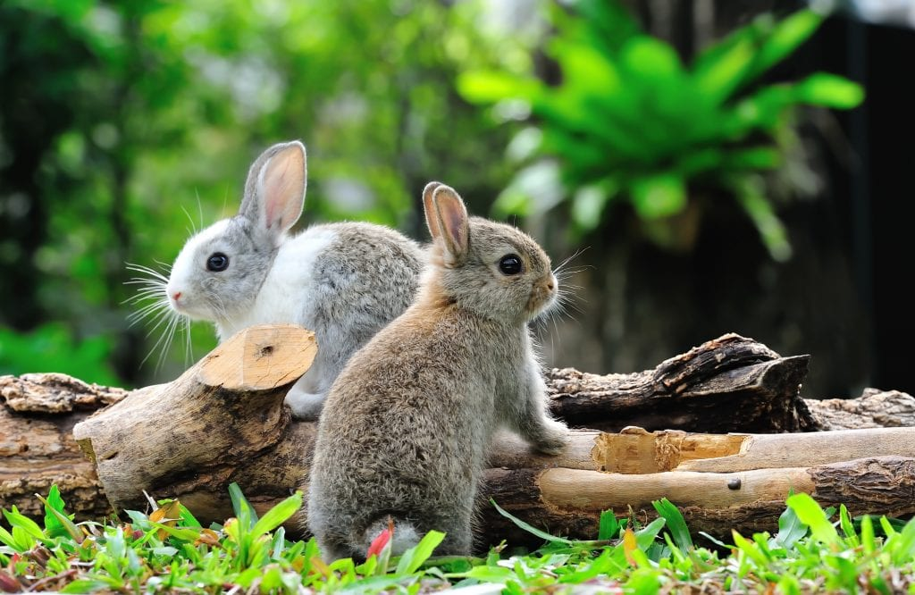 Cute bunnies sitting on a log