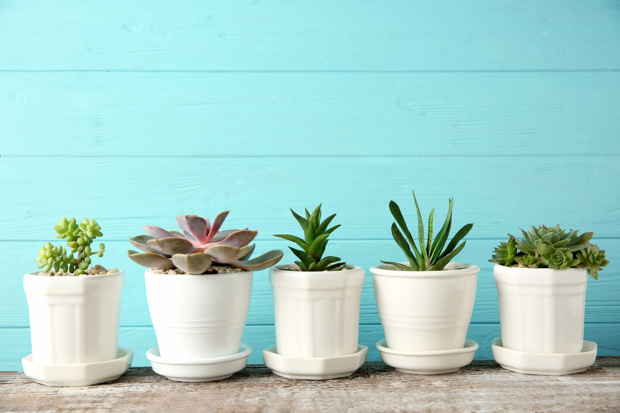 Potted plants against a blue wall