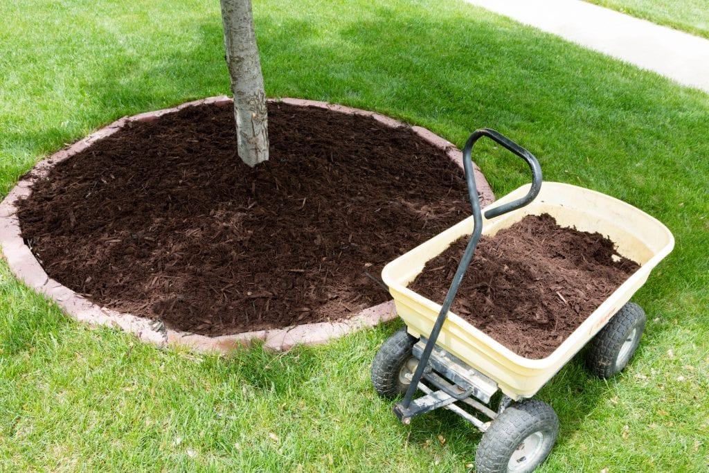 How to mulch a tree