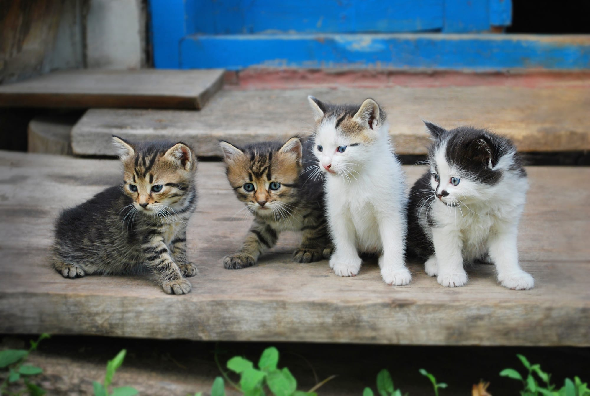 Kittens sitting on a step
