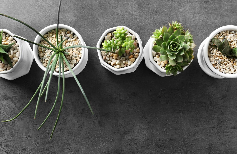 Container plants with stones
